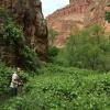 milky-way-mooney-falls-havasu-havasupai-beaver-bucket-list-tracy-lee-235