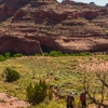 neon-fence-canyon-golden-cathedral-escalante-canyoneering-rappelling-tracy-lee-107
