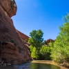 neon-fence-canyon-golden-cathedral-escalante-canyoneering-rappelling-tracy-lee-112