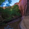 neon-fence-canyon-golden-cathedral-escalante-canyoneering-rappelling-tracy-lee-121