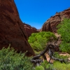 neon-fence-canyon-golden-cathedral-escalante-canyoneering-rappelling-tracy-lee-122
