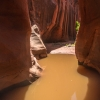 neon-fence-canyon-golden-cathedral-escalante-canyoneering-rappelling-tracy-lee-187