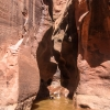 neon-fence-canyon-golden-cathedral-escalante-canyoneering-rappelling-tracy-lee-197