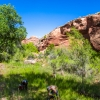neon-fence-canyon-golden-cathedral-escalante-canyoneering-rappelling-tracy-lee-252